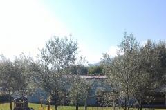 giardino isola