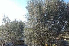 giardino isola 1